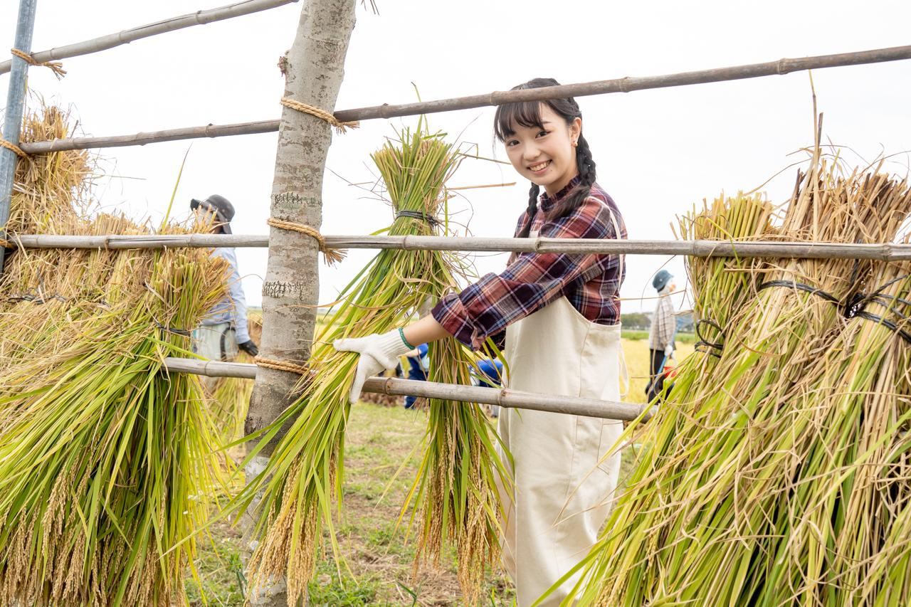 刈った稲をかける中島大使