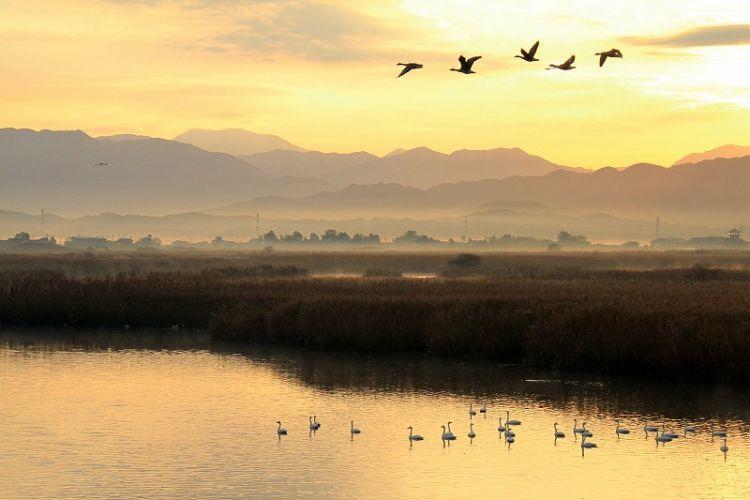朝焼けの福島潟と白鳥