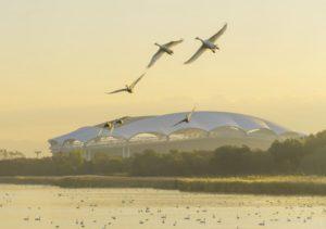 新潟市内の白鳥飛来スポット